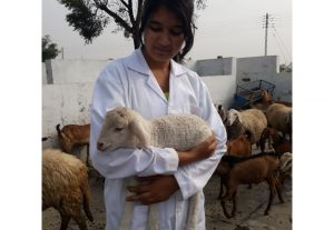 Consult career in veterinary medicine